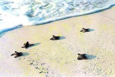 Baby Turtles
